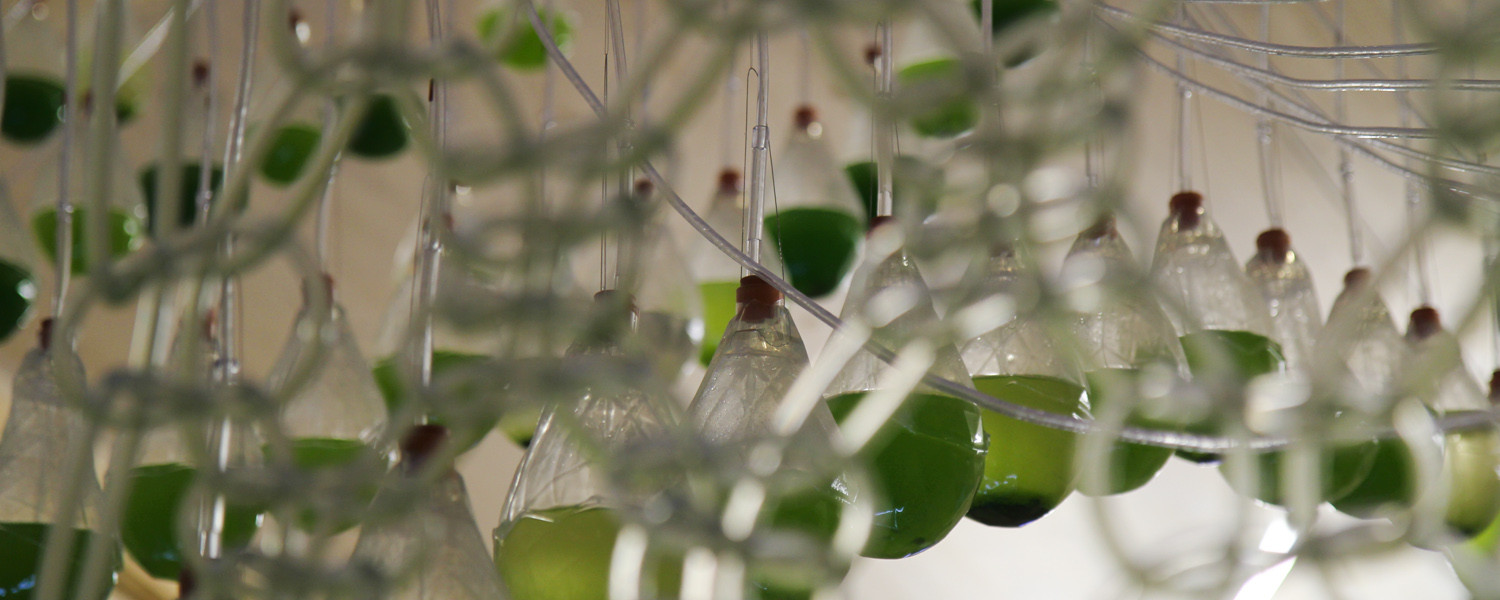 Living algae through a textile photosynthesising to produce bio-fuel