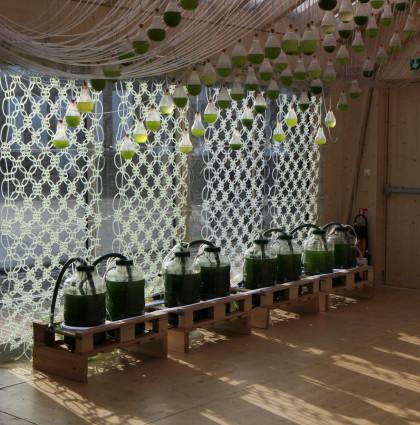 Algae Curtain